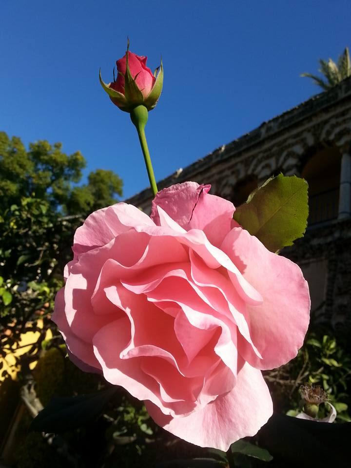 Primavera en el Alcázar