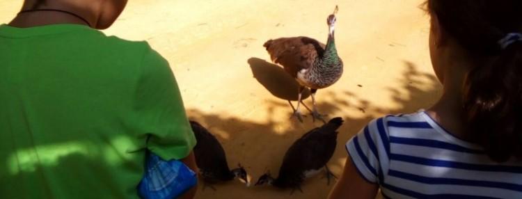 Animales en el Alcázar